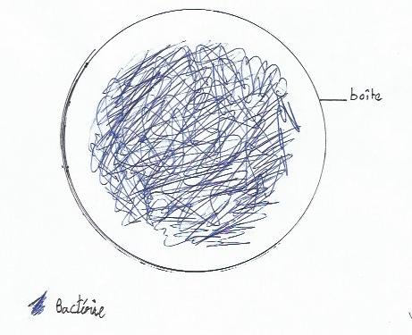 bactérie 1